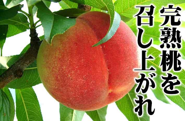 完熟の桃狩り