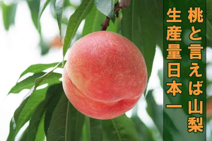 桃狩りといえば山梨、生産量日本一