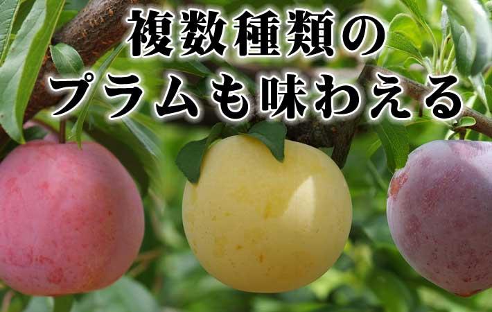 桃はみんなが好きな夏果実