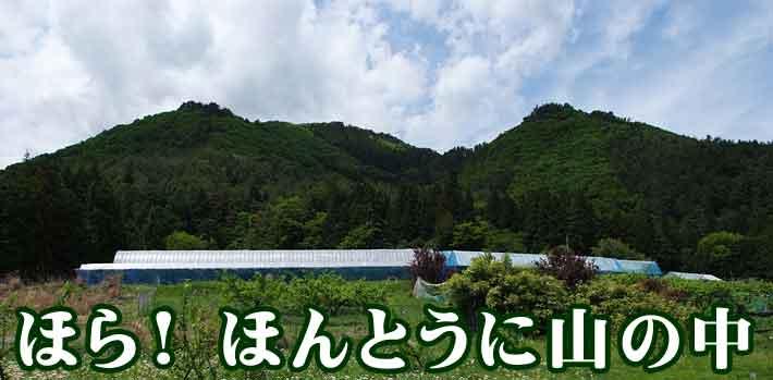 標高700mに位置する山の果樹園