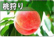 桃狩り 山梨