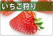 イチゴ狩り 関東
